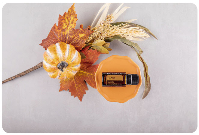 doTERRA Clove - Produkt des Monats Oktober 2020